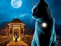 Éjszakai nyomozás - Kiállítás és detektívjáték holdfényben